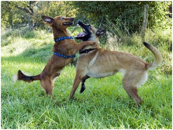 hund schreit plötzlich auf