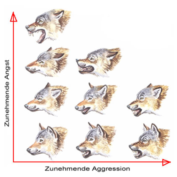 Körpersprache Des Hundes Arbeitsblatt : Körpersprache der hunde hundeschule lahntal judith